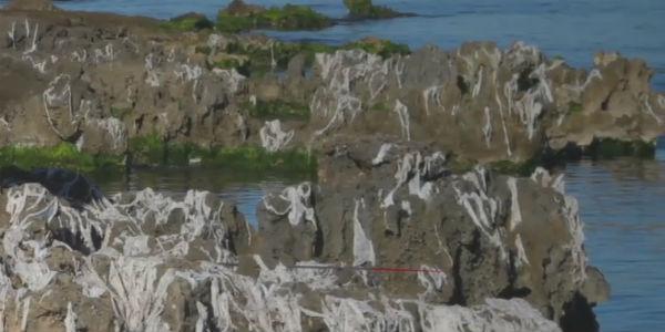 desatrancos-toallitas-rios-playas