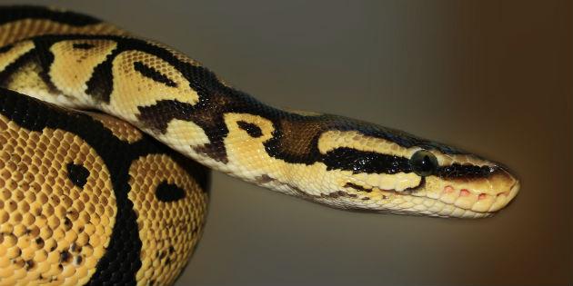 serpiente-canada-alcantarillas-aguas-residuales